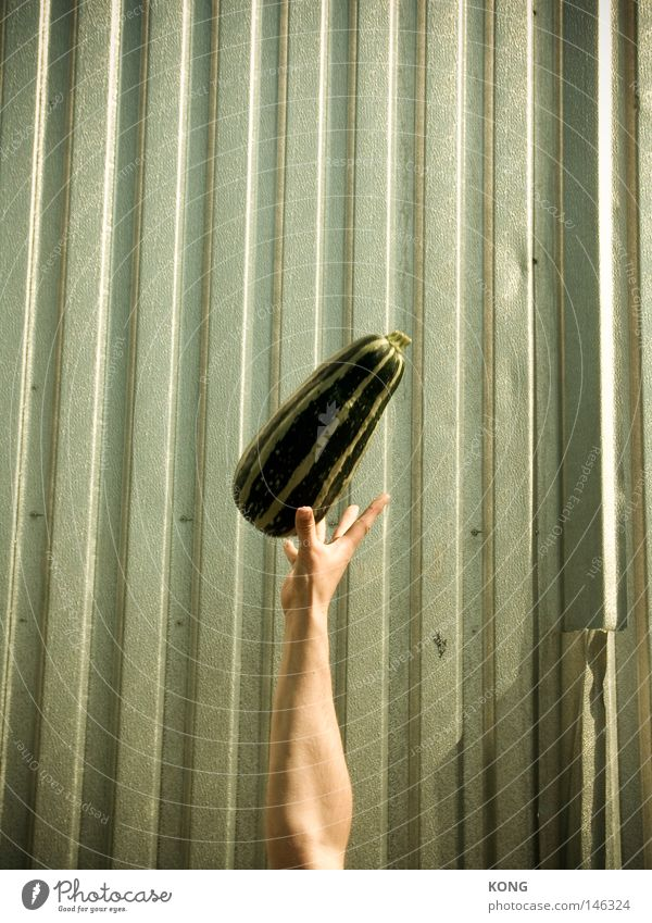 Hand Green Flying Fruit Aviation Catch Vegetable Easy Hover Throw Pumpkin Vegetarian diet Cucumber Centrifuge Zucchini Throw in the air