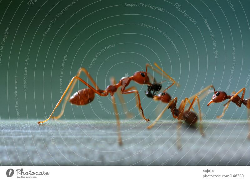 Red Animal Death Orange Together 3 Group of animals Logistics Asia Insect Appetite Argument Virgin forest Teamwork To feed Feed