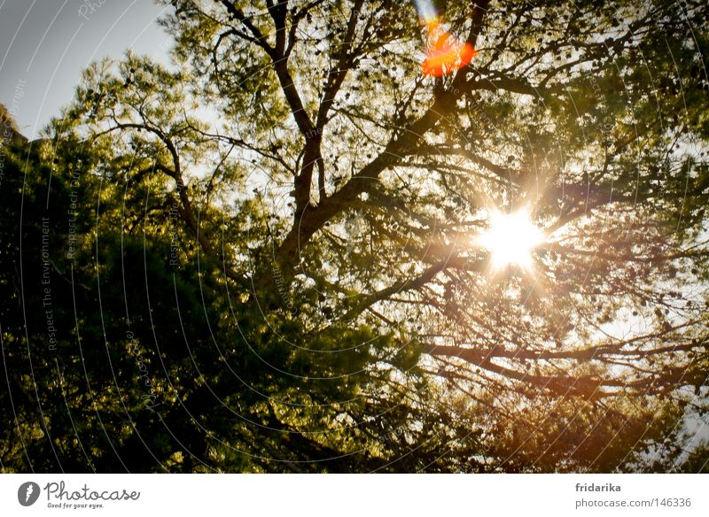 Nature Tree Sun Summer Leaf Life Relaxation Emotions Warmth Bright Stars Weather Energy Star (Symbol) Growth