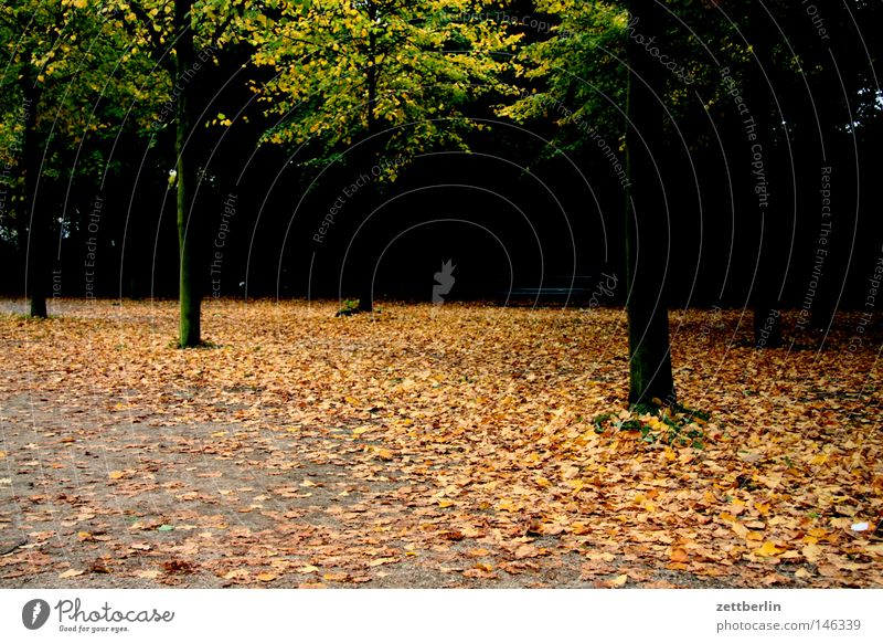 Tree Leaf Forest Dark Autumn Sadness Lanes & trails Park Grief To go for a walk Transience Seasons Footpath Avenue Holiday season Autumn leaves