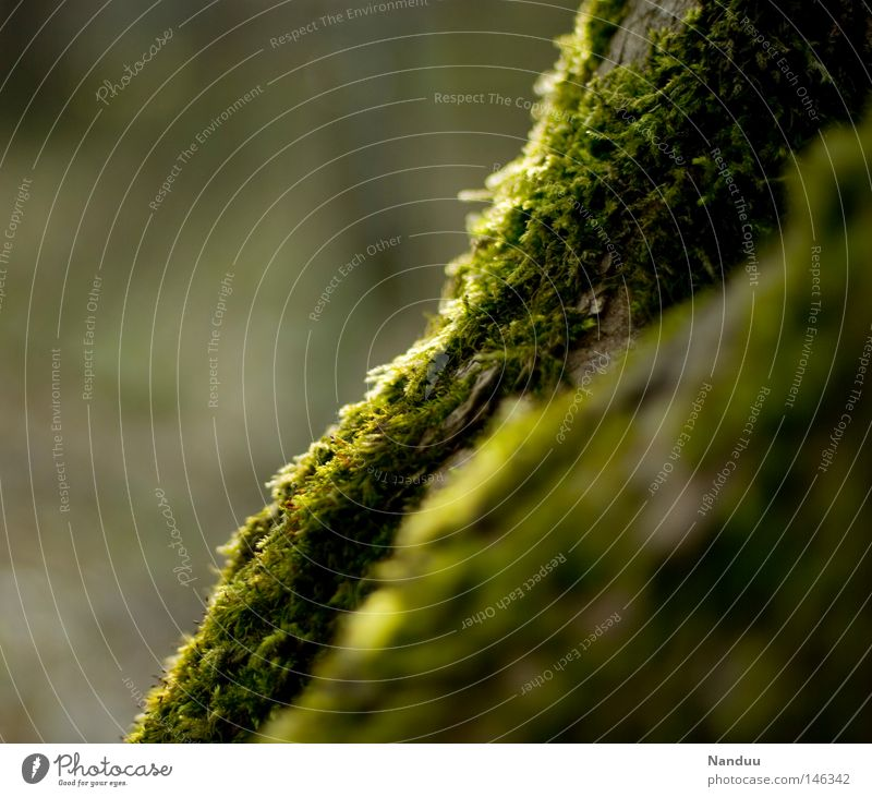 waves Moss Nature Exterior shot Green Structures and shapes Wavy line Calm Peace Authentic Maturing time Plant Soft Delicate Cuddly Overgrown Shabby Beautiful