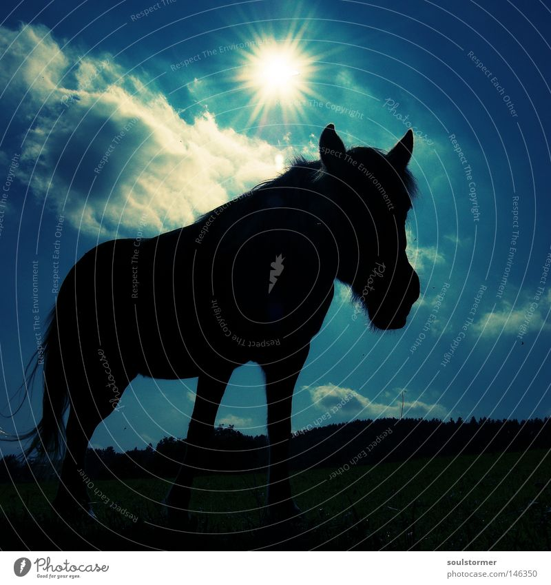 Sky Sun Black Animal Dark Bright Fear Stars Sleep Horse Threat Mammal Dusk Floodlight Frame Section of image