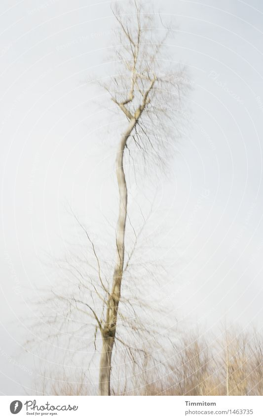 Sky Nature Plant Tree Winter Forest Environment Esthetic Tall Individual Irritation Bleak Unclear