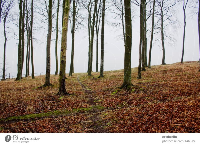 Book Search Beech tree Forest Tree trunk Wood Forestry Lumber industry Hiking Footpath Cliff Baltic Sea Autumn Winter Off-Season Lanes & trails Fence