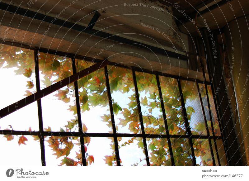 Calm Leaf Loneliness Autumn Window Glass Gloomy Vantage point Derelict Window pane Remote Pane Tumbledown
