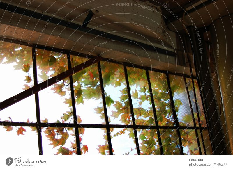 window I Window Vantage point Window pane Pane Leaf Multicoloured Autumn Loneliness Calm Remote Derelict Tumbledown Glass Gloomy Introverted change of seasons