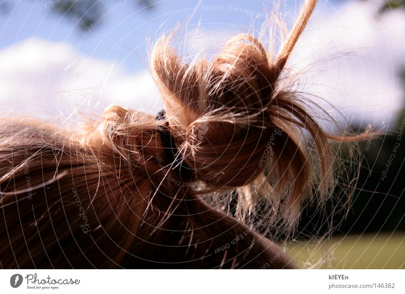 hairy Hair and hairstyles Knot Braids Comb Blonde Sky Meadow Relaxation Funny Joy Contentment