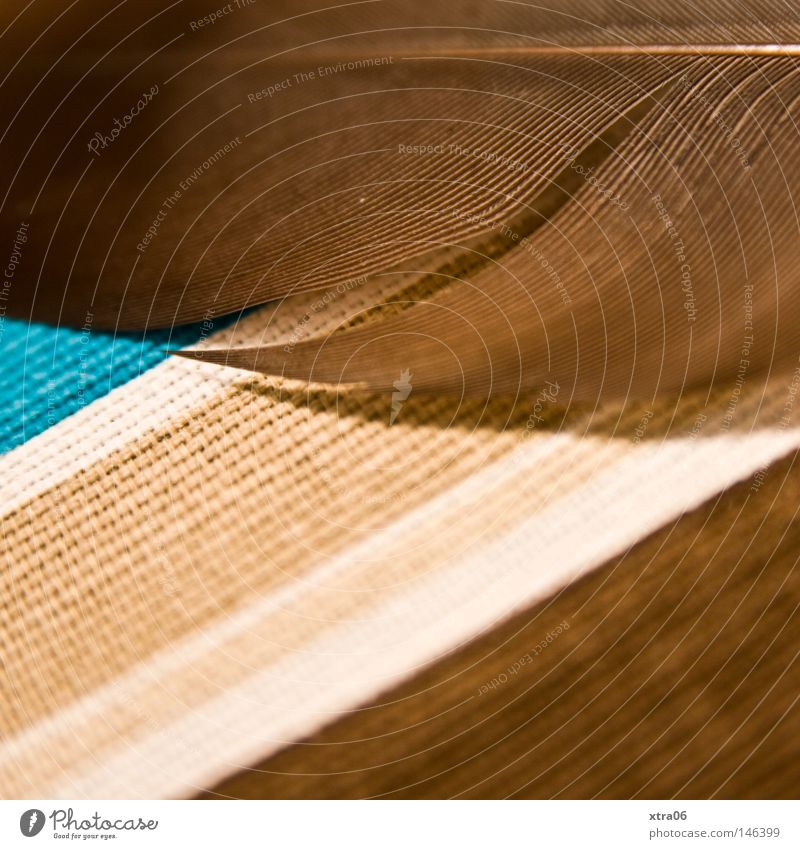 Blue Brown Feather Things Cloth Turquoise Striped