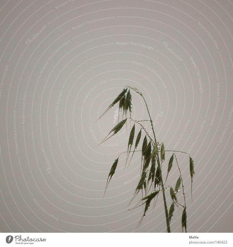 Plant Calm Dark Autumn Death Grass Gray Sadness Rain Drops of water Wet Grief Gloomy Distress Blade of grass