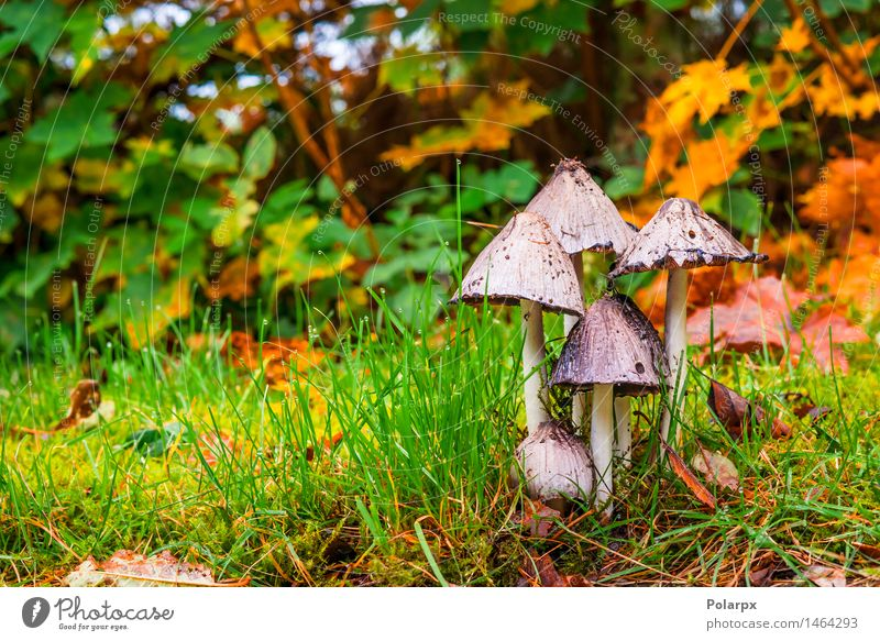 Mushrooms in the forest in the fall Beautiful Summer Nature Plant Autumn Grass Moss Leaf Park Meadow Forest Growth Fresh Natural Wild Brown Green Dangerous