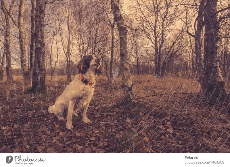 Dog sitting in the forest at autumn Hunting Hiking Woman Adults Environment Nature Animal Sky Autumn Tree Leaf Forest Lanes & trails Fur coat Pet Observe Sit