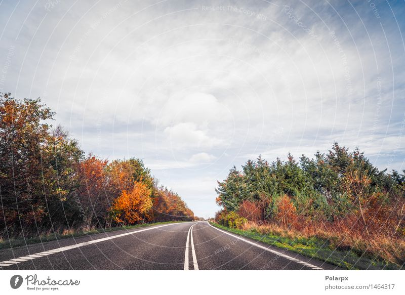 Highway surrounded by colorful trees in the fall Sky Nature Vacation & Travel Blue Green Beautiful Tree Red Landscape Leaf Clouds Forest Yellow Street Autumn