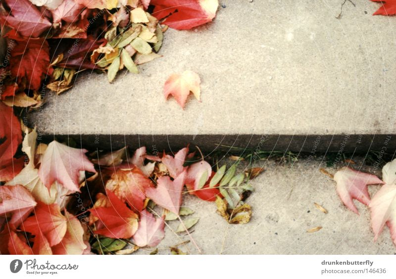 Nature Green Red Leaf Yellow Cold Autumn Warmth Background picture Wind Concrete Stairs Ground Physics To fall