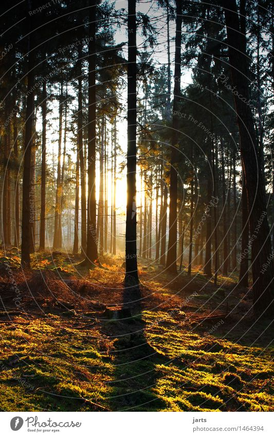 good evening Nature Landscape Plant Sunrise Sunset Beautiful weather Tree Forest Authentic Natural Warmth Safety (feeling of) Serene Patient Calm Hope spessart