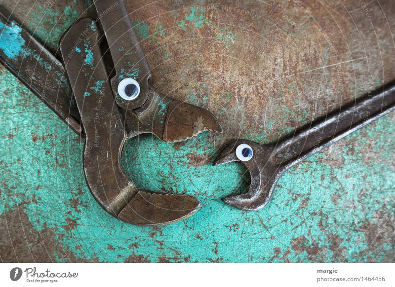 Animal Eyes Brown Fear Fish Fear of death Profession Turquoise Stress Services Craft (trade) Argument Animal face To feed Tool Workplace