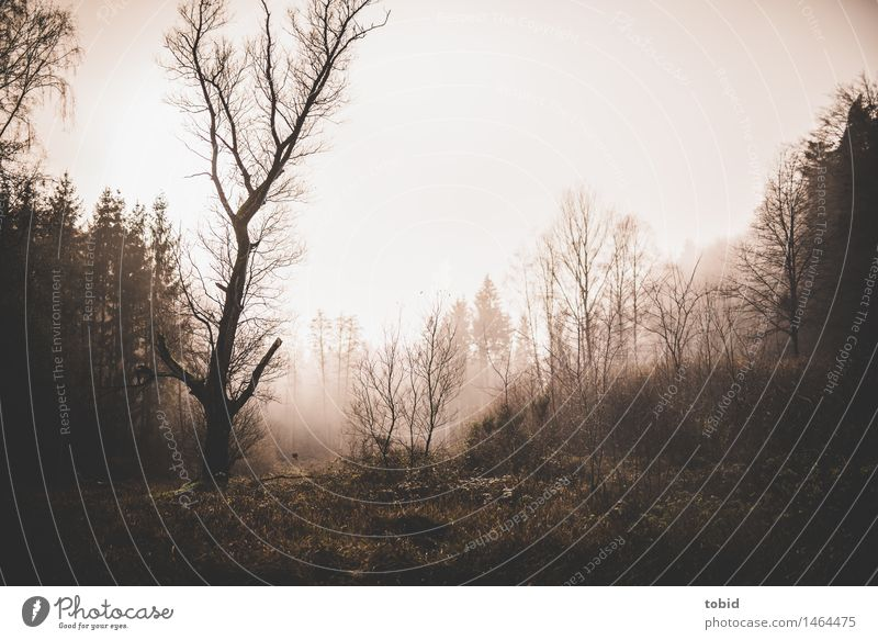 enchanted Nature Landscape Plant Sky Autumn Winter Bad weather Fog Tree Meadow Field Forest Hill Threat Dark Cold Loneliness Apocalyptic sentiment Thin Bleak