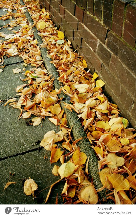 Leaf Street Autumn Wall (building) Orange Dirty Facade Brick Sidewalk Traffic infrastructure Footpath Autumn leaves Curbside October Roadside Autumnal
