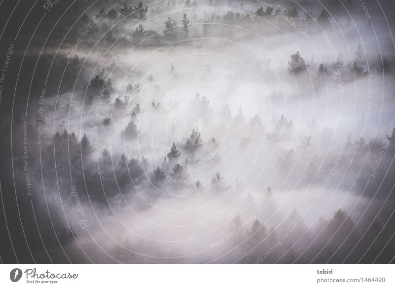 fog Nature Landscape Plant Elements Clouds Fog Tree Fir tree Coniferous forest Forest Hill Mountain Dark Free Uniqueness Idyll Shroud of fog Cloud forest