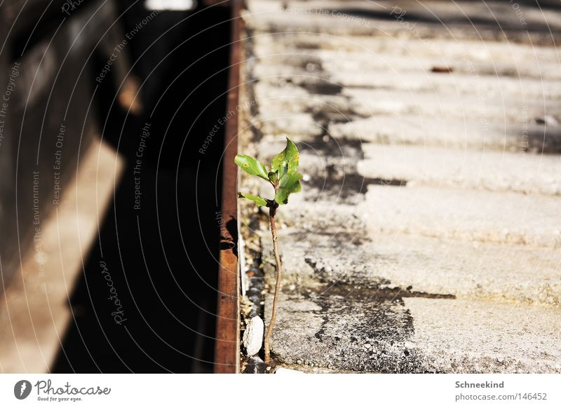 Green Plant Loneliness Grass Gray Power Concrete Force Transience Railroad tracks Strong Traffic infrastructure Blade of grass Paving stone Courtyard Survive