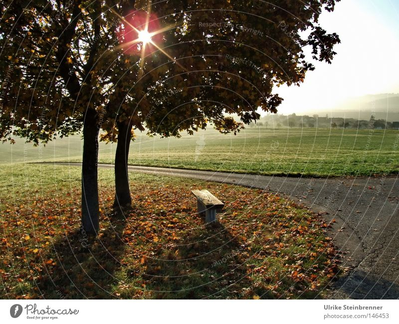 Star-shaped sun shines through a pair of trees in autumn Trip Sun 2 Human being Landscape Stars Autumn Fog flaked Meadow Field Lanes & trails To fall green