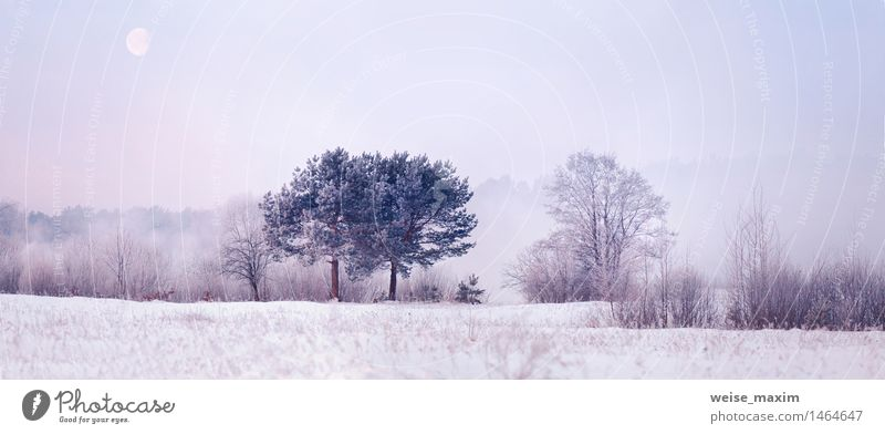Cold winter morning with a moon Sky Nature Plant Water Tree Landscape Winter Meadow Snow Wood Weather Air Ice Fog Elegant Bushes