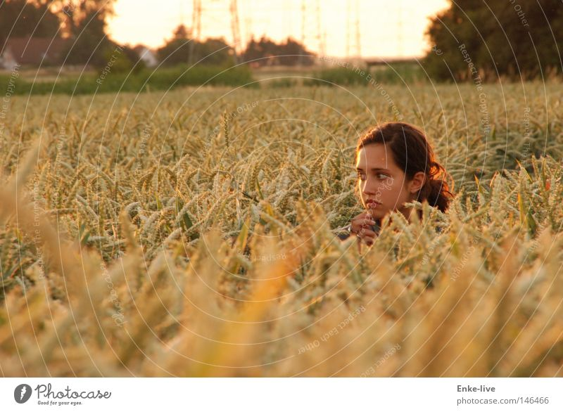 2. corn girl Cornfield Wheat Woman Beautiful Field Horizon Relaxation Dusk Loneliness Harmonious Contentment Timidity Hop Think Looking up Mysterious Silent