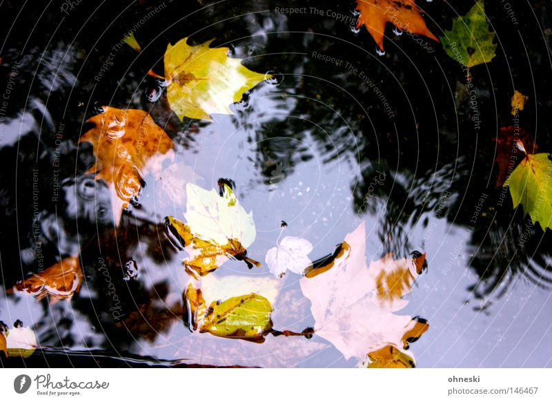 Fell into the water Multicoloured Reflection Water Drops of water Autumn Rain Leaf Street Brown Yellow Green Transience Puddle Circle