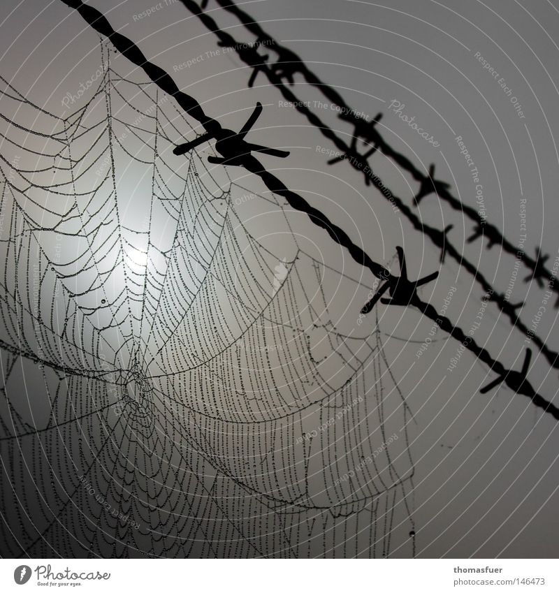 Life on the wire Spider's web Wire Barbed wire Drops of water Dew Morning Gray Dread Captured Surveillance Ministry for Internal Security Dark Indifference