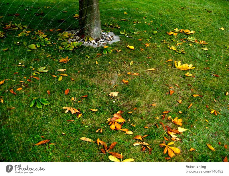 the leaf does not fall far from the trunk Nature Earth Autumn Tree Grass Leaf Meadow Yellow Green Tree trunk Ground Colour photo Fallen Autumn leaves