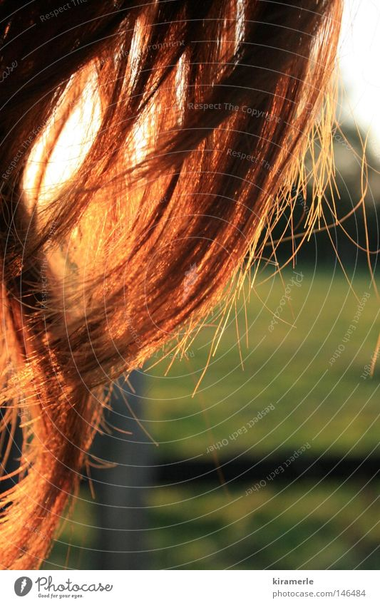 Sun Green Red Meadow Autumn Emotions Freedom Happy Hair and hairstyles Field Waves Wind Free Long Fence Curl