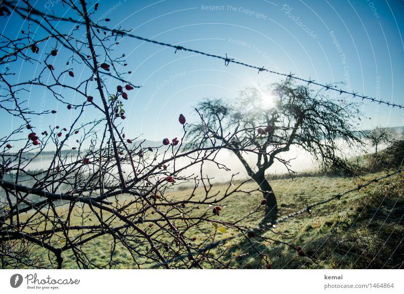 Nature Plant Blue Green Beautiful Sun Tree Landscape Calm Environment Autumn Meadow Fog Growth Fresh Beautiful weather