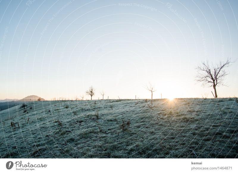 Nature Tree Sun Landscape Calm Winter Cold Environment Meadow Grass Bright Horizon Glittering Ice Fresh Illuminate