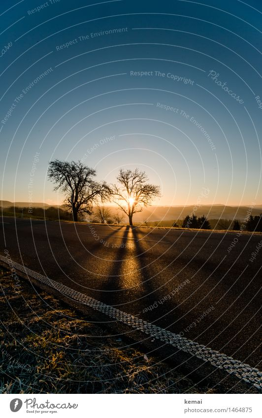 The other Christmas tree Environment Nature Landscape Plant Cloudless sky Sun Sunrise Sunset Sunlight Winter Beautiful weather Tree Grass Traffic infrastructure