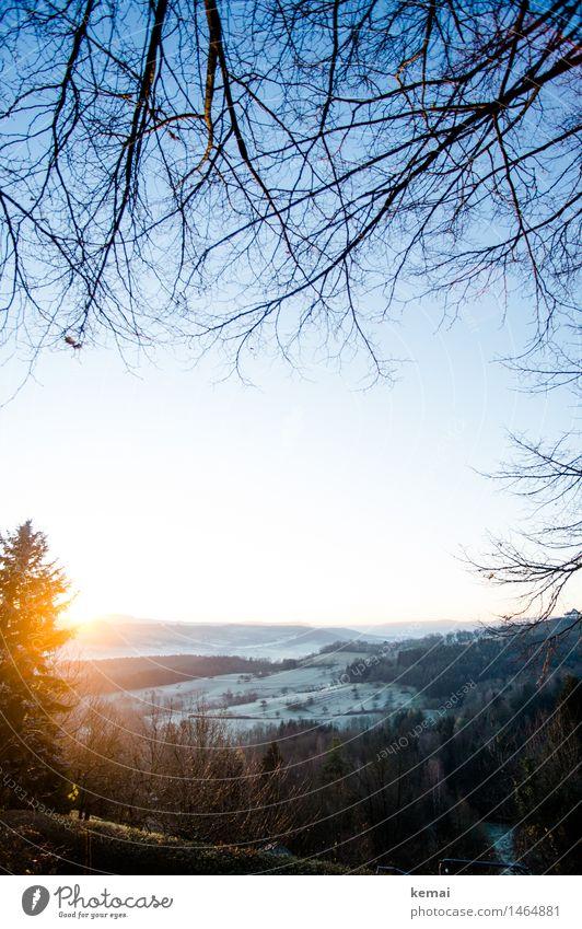 Nature Plant Beautiful Tree Sun Landscape Calm Winter Cold Environment Grass Bright Glittering Ice Fresh Illuminate