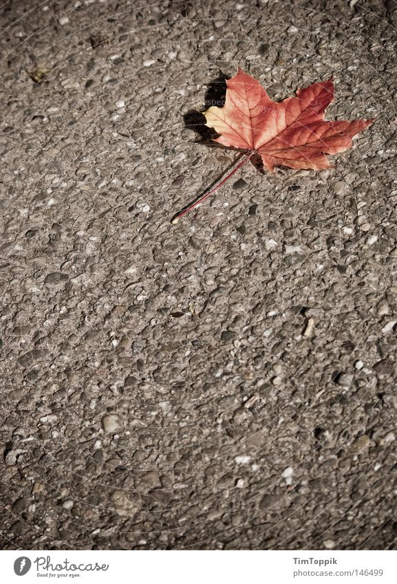 The Autumn Leaves (Street Version) Leaf Seasons Tree Tar Asphalt Lanes & trails Loneliness Dyeing Transience
