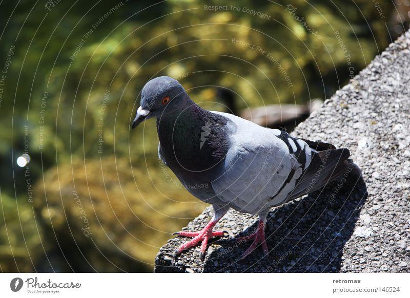 Water Animal Lake Warmth Bird Flying Wet Feather Physics Pond Pigeon