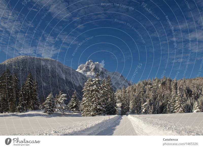 Way to the Wettersteinspitze Hiking Cross country skiing Environment Nature Landscape Plant Elements Water Sky Winter Beautiful weather Fir and spruce forest