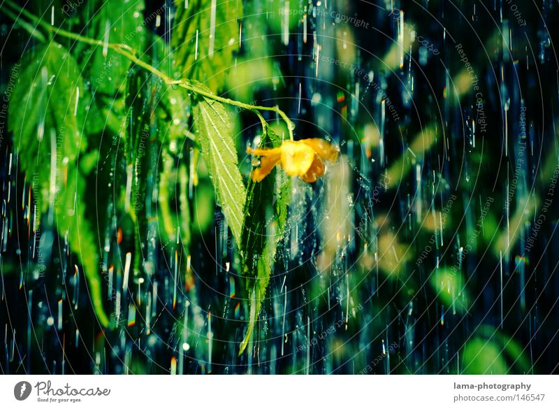 rain Rain Drops of water Thunder and lightning Storm Autumn Autumnal weather Wet Cold Weather Flower Plant Tree Leaf Green Park Blossom Droop