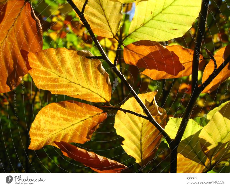 ...and a few more leaves Leaf Autumn Multicoloured Leaf green Brown Yellow Red Green Orange Physics Sunbeam Beautiful weather Branchage Twigs and branches