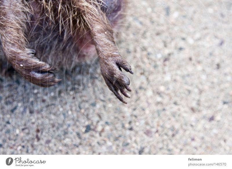 flap one's hedgehog Hedgehog Paw Animal foot Floor covering Ground Asphalt Claw Legs Pelt