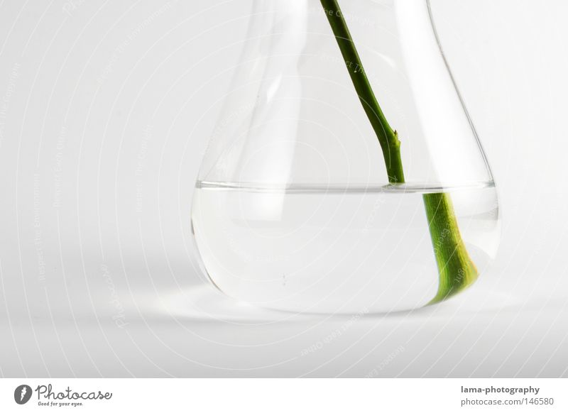 Water White Flower Green Plant Glass Pure Clarity Science & Research Stalk Fluid Isolated Image Transparent Stick Biology Chemistry