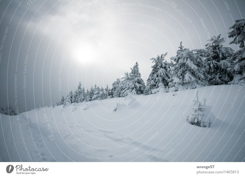 Christmas wish Nature Landscape Sky Clouds Horizon Sun Winter Bad weather Snow Tree Spruce forest Forest Mountain Dark Gray Black White Winter forest Harz