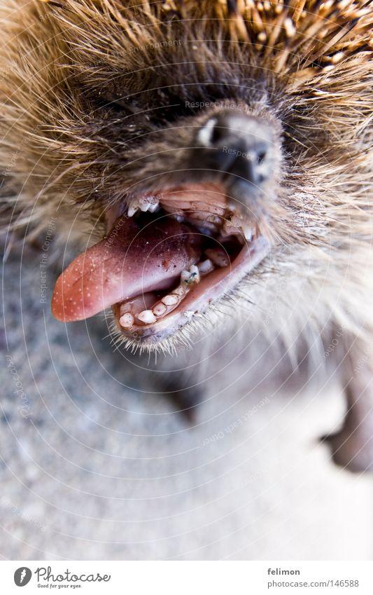 Animal Death Nose Broken Asphalt Set of teeth Pelt Tongue Snout Muzzle Spine Nostril Hedgehog Mouth Pharynx Bad breath