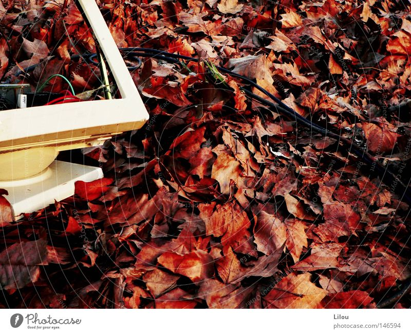 White Red Leaf Yellow Autumn Computer Brown Cable Broken Trash To fall Screen Seasons Downward Destruction Like