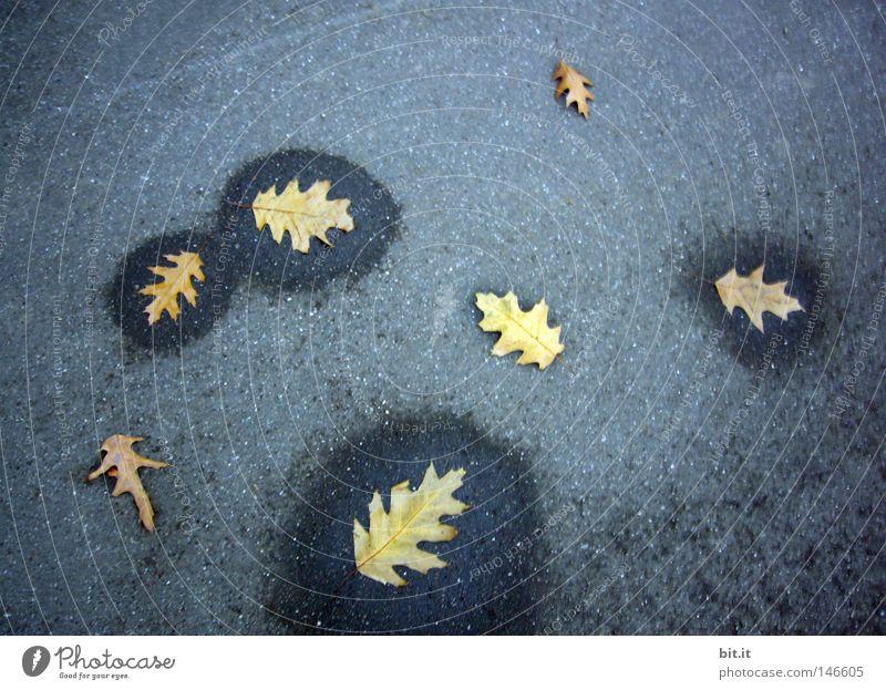 OAK LEAF WET-DRY Oak leaf Autumn leaves Autumnal Early fall Damp Limp Asphalt Bordered