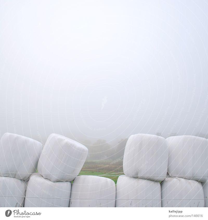 White Meadow Autumn Food Field Fog Empty Circle Round Teeth Set of teeth Agriculture Harvest Statue Seasons