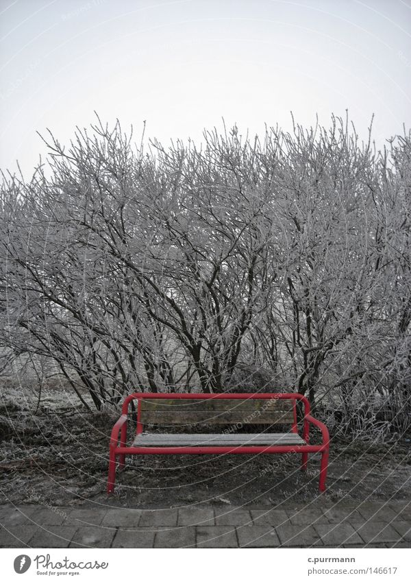 Plant Red Winter Vacation & Travel Loneliness Cold Snow Sadness Fresh Grief Frost Island Bench Bushes Pelt Distress