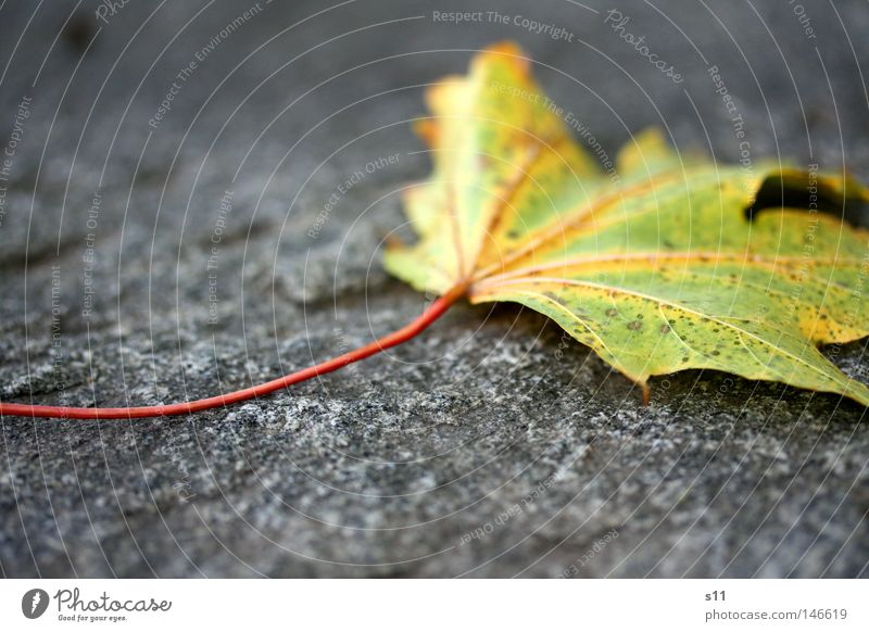 Nature Green Tree Red Plant Leaf Loneliness Yellow Street Cold Autumn Lanes & trails Stone Weather Wind Lie