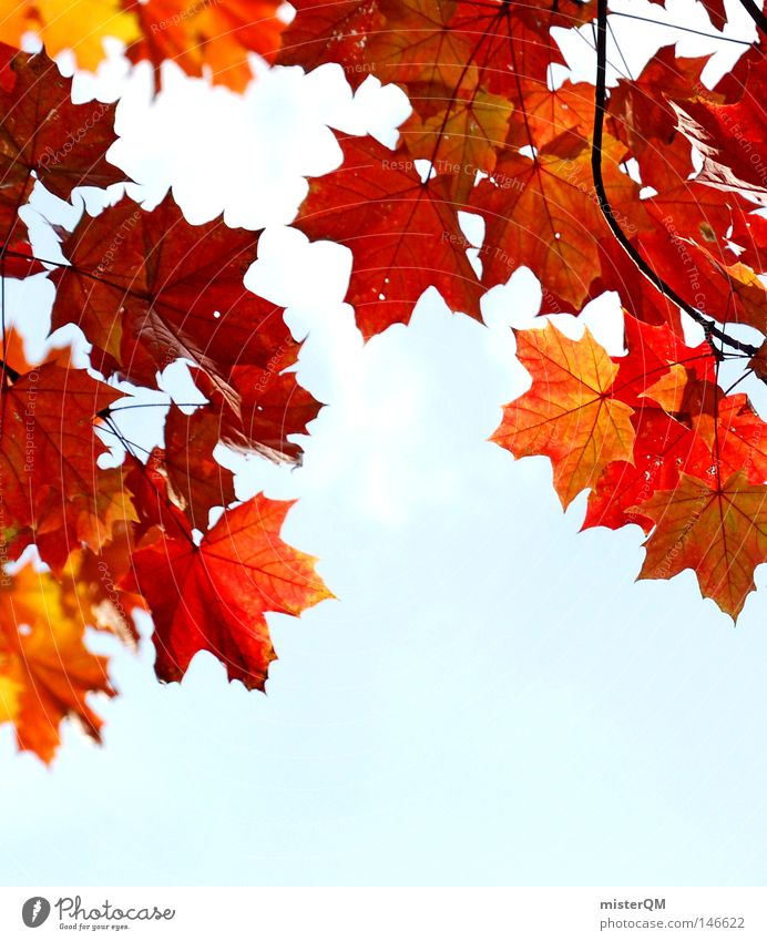 Sky Nature Blue Green Beautiful Colour Red Leaf Yellow Dye Autumn Death Authentic Wind Esthetic Trip