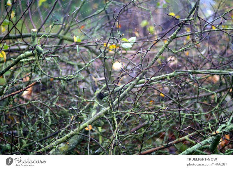 Nature Plant Green Tree Calm Dark Environment Yellow Sadness Autumn Emotions Death Garden Brown Moody Arrangement